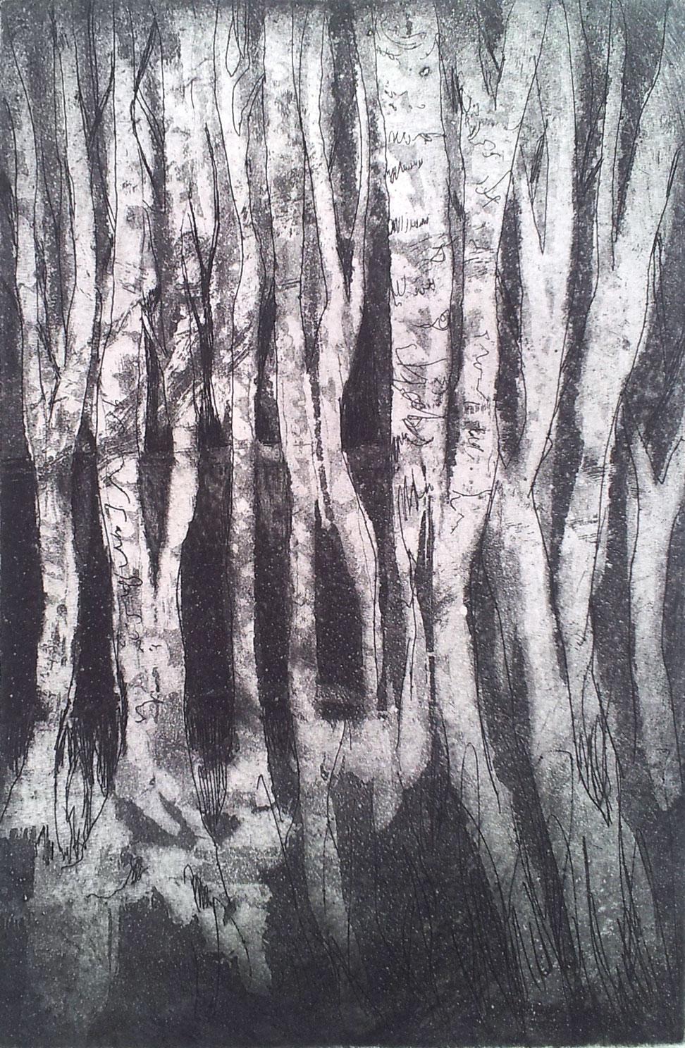 Etch 'Birch tree forest'