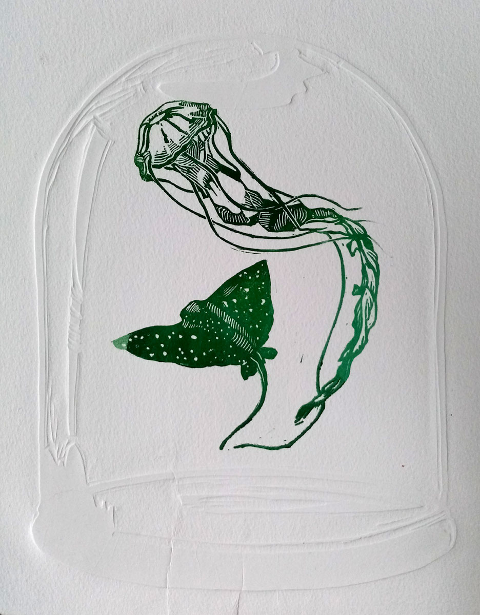 '  Lockdown Jellyfish and Ray'